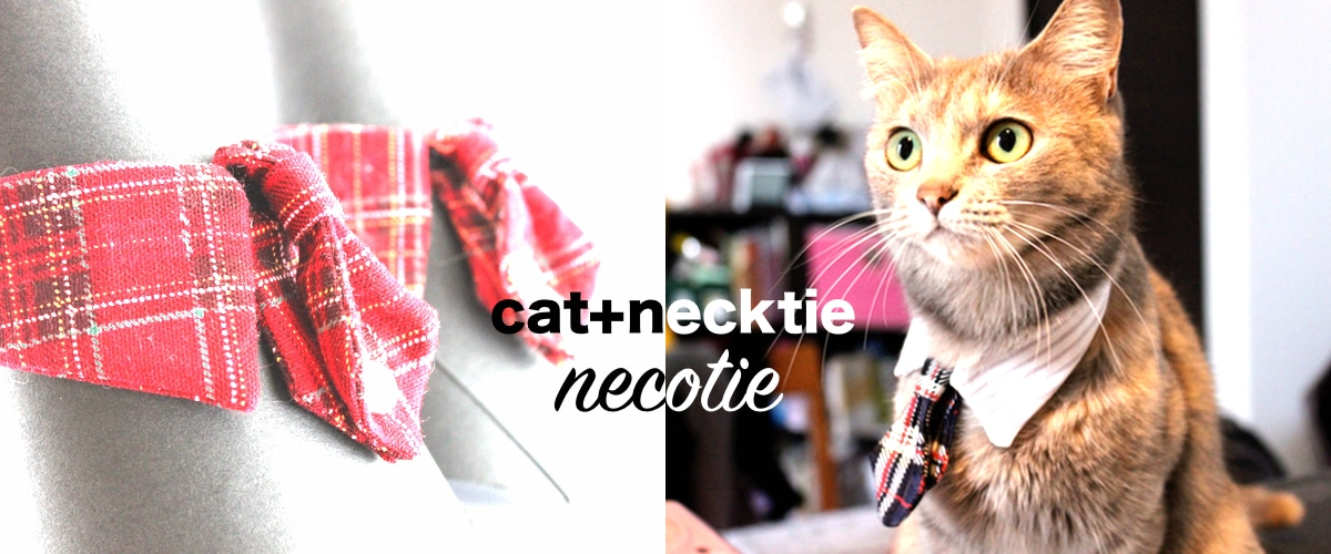Accessorize Your Cat
