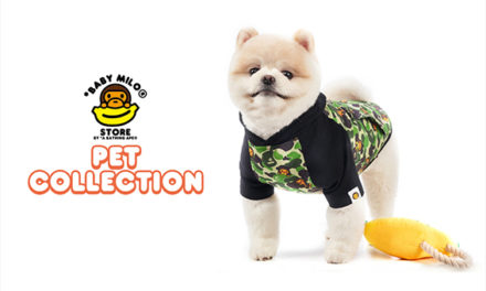 Outfit Your Pet in the Latest Bape Streetwear